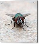 Fly Acrylic Print