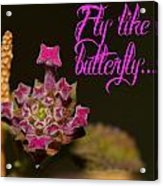 Fly Like A Butterfly Acrylic Print by Old Pueblo Photography