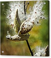 Fly Me Away Acrylic Print