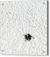 Fly On A Wall Acrylic Print