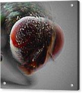Fly On The Wall Digital Art Acrylic Print