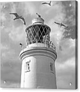 Fly Past - Seagulls Round Southwold Lighthouse In Black And White Acrylic Print