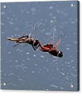 Togetherness Fly United 7 Acrylic Print