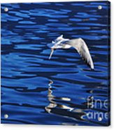Flying Bird Acrylic Print