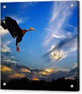 Flying Duck Acrylic Print