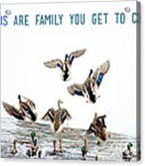 Flying Ducks And A Friends Quote Acrylic Print