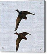 Flying Fast Ducks Acrylic Print