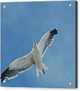 Flying Feathered Friend Acrylic Print