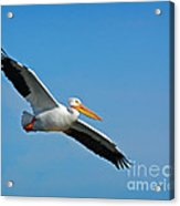 Flying High Acrylic Print