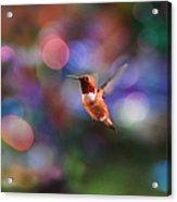 Flying Hummingbird And Bokeh Acrylic Print
