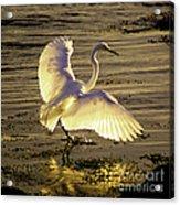 Flying In V2 Acrylic Print