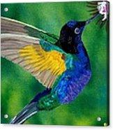 Flying Jewel Acrylic Print