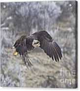Flying Low Acrylic Print by Mike  Dawson