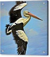 Flying Pelican 4 Acrylic Print by Heng Tan