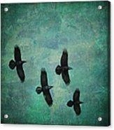 Flying Ravens Acrylic Print