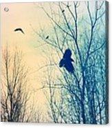 Flying Retro Acrylic Print