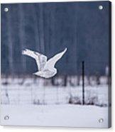 Flying Through Acrylic Print