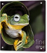 Flying Tree Frog Acrylic Print by Linda D Lester