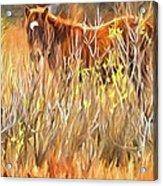 Foal In The Sticks Acrylic Print