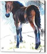 Foal Painting Acrylic Print