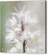 Foamflower Square Acrylic Print