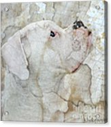 Focus Acrylic Print by Judy Wood