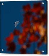 Focused On The Autumn Moon Acrylic Print