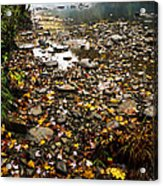 Fog And Fall Color Williams River Acrylic Print by Thomas R Fletcher