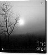 Fog And Tree Acrylic Print