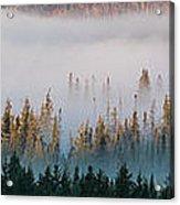 Fog And Trees Acrylic Print