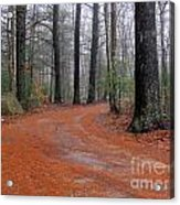 Fog In The Pines Acrylic Print