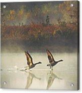 Foggy Autumn Morning Acrylic Print