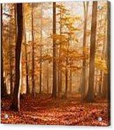 Foggy Beech Forest Acrylic Print