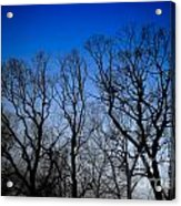 Foggy Blue Morning Acrylic Print