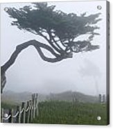 Foggy Coastal Trail In Miramar Acrylic Print