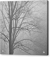 Foggy Days Acrylic Print