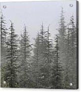 Foggy Forest Retro Series. Acrylic Print