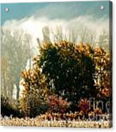 Foggy Frost Acrylic Print