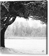 Foggy Icestorm Acrylic Print