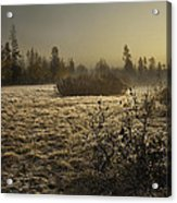 Foggy Meadow Acrylic Print