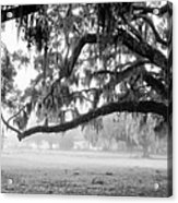 Foggy Morning On Coosaw Plantation Acrylic Print