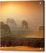 Foggy Morning Pasture Time Acrylic Print