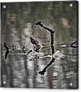 Foggy Morning Pondscape Acrylic Print