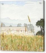Foggy Morning Walk Ano Nuevo Acrylic Print by Kerry Van Stockum