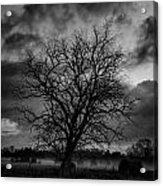 Foggy Mornings Acrylic Print