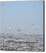 Foggy Seabirds Parksville Beach Acrylic Print