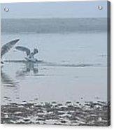 Foggy Seabirds Low Tide Buffet Acrylic Print