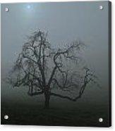 Foggy Tree Acrylic Print