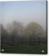 Foggy Vineyard Morning Acrylic Print