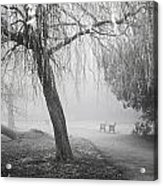Foggy Willow Acrylic Print